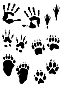 paw-print-clip-art-other-animals05-large